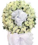 hoa tang 7