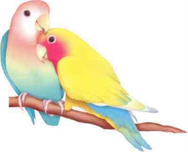 lovebirds1-large-content